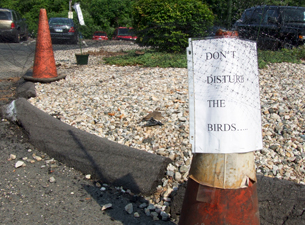 Killdeer nesting area is cordoned off by cones